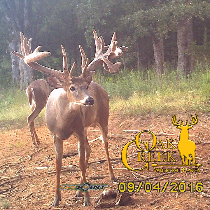 Oak Creek Monster Buck Tracker 9-7-16